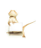 Lizard holding card in hand on white. Background Royalty Free Stock Photo