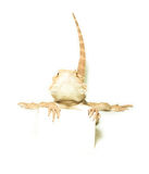 Lizard holding card in hand Royalty Free Stock Photos