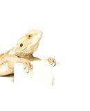 Lizard holding card in hand Royalty Free Stock Photography