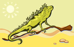 Lizard, iguana in the desert Stock Images
