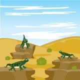 Lizard Iguana In Desert Royalty Free Stock Image