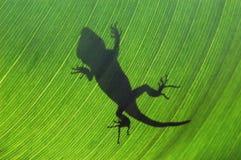 Lizard on Leaf. Lizard shilouette on banana Leaf Royalty Free Stock Photos
