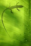 Lizard on Leaf Stock Photo