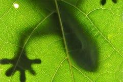 Lizard on Leaf Stock Images