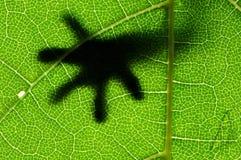 Lizard on Leaf Stock Image