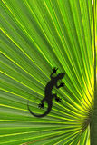Lizard on leaf Stock Image