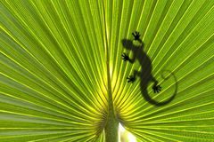 Lizard on leaf Royalty Free Stock Photos