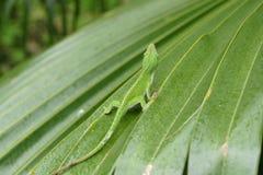 Lizard on leaf Royalty Free Stock Image
