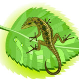 Lizard on a leaf. Lizard sitting on a green leaf with dew drops Stock Photography