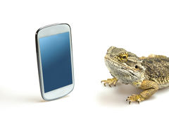 Lizard is looking on the display of the smart phone Royalty Free Stock Photo