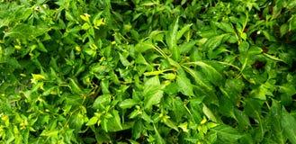 Leaf jumper royalty free stock images