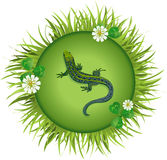 Lizard on a meadow Stock Photography