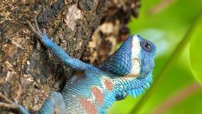 Lizard in nature. stock video
