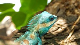 Lizard in nature. stock footage