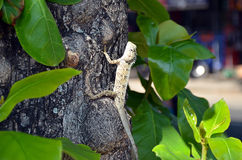 Lizard in nature climbs on the old tree Stock Photography