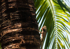 Lizard on the palm close-up view royalty free stock photo