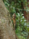 Lizard. A lizard pass through a zoo and rest on tree Royalty Free Stock Photo