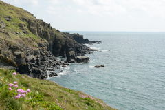 Lizard Point Cornwall UK. View of cliffs in Lizard point UK, sharp cliffs, blurred pink flowers foreground Royalty Free Stock Photo