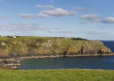Lizard point Stock Images