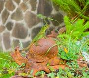 A lizard posing on a garden ornament Stock Images