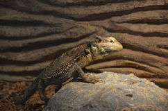 Lizard reptile exhibition Stock Image