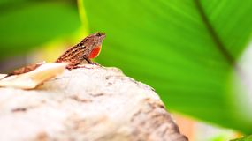 Lizard on rock in aviary Royalty Free Stock Photo