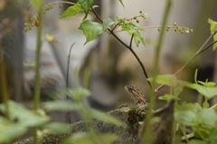 Lizard. On a rock photographed through a fence Stock Photos