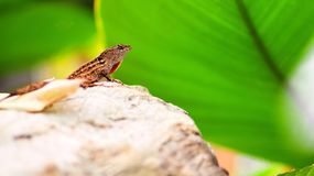 Lizard on rock Stock Photo