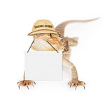 Lizard Safari Guide Stock Photography