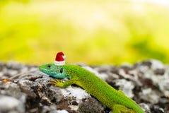 The lizard in the Santa's cap Stock Photos