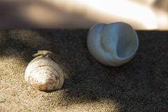 The lizard on the shell is hiding in the shade. Stock Photography