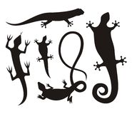Lizard silhouettes Royalty Free Stock Photography