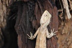 Lizard Sitting on Dark Tree Stock Photography