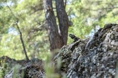 Lizard sitting on a stone stock photos