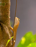 Lizard sitting on the tree branch Stock Photography