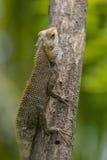 Lizard sitting on a tree stump. Stock Photos