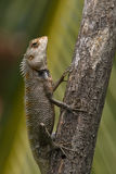 Lizard sitting on a tree stump. Royalty Free Stock Photography