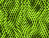 Lizard skin Stock Photo
