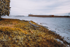 Lizard standing still on the grass. Wide angle view of gecko standing still on dry grass near fence of plants with sandy path and ocean horizon in defocused stock images