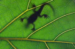 Lizard stay on leaf Stock Photos