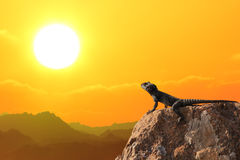 Orange sunset. Lizard on a stone against the bright orange sunset over mountains royalty free stock images