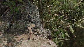 Lizard on stone.Machu Picchu from right side view. Tourists on Machu Picchu.Mountains of Michu Picchu.