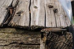 Small lizard. The lizard in the sun beams Stock Image