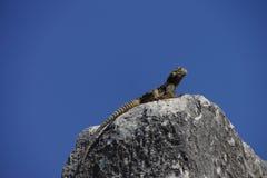 Lizard suns itself. On a rockin ancient Priene, Turkey Stock Photo