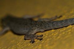Lizard tail. Stock Photography