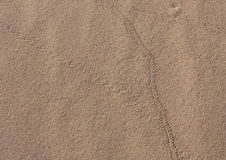 Lizard Tracks Stock Photography