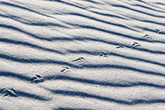 Lizard Tracks on White Sands Royalty Free Stock Images