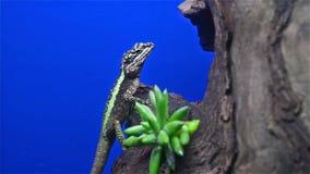 Lizard on tree stock footage