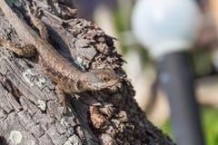 Lizard on tree detail Stock Photo