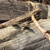 Lizard on a tree royalty free stock images